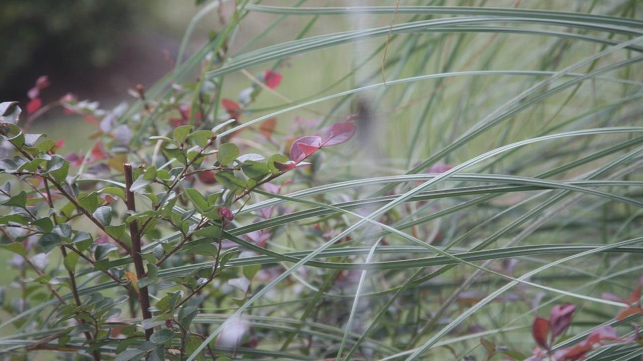 Jns2pnzbsowufsc9bopk flowers blades