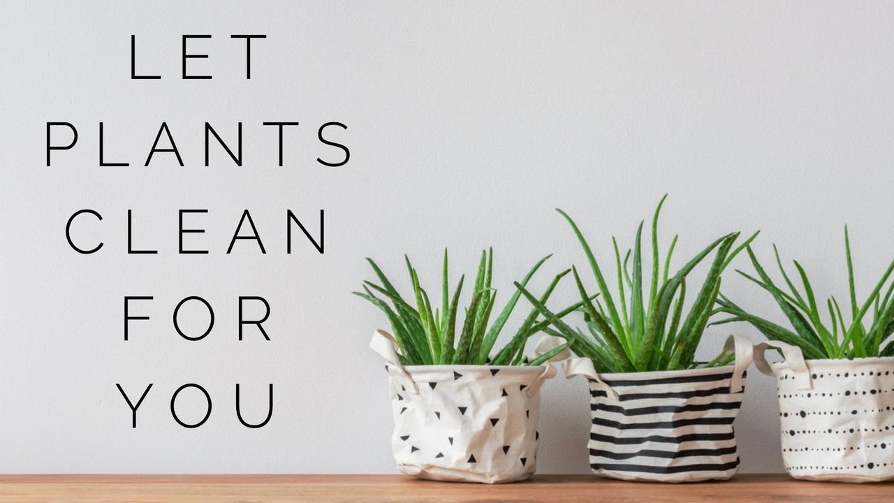 Zdwrtjbrikjfwnhisqmo let plants clean for you
