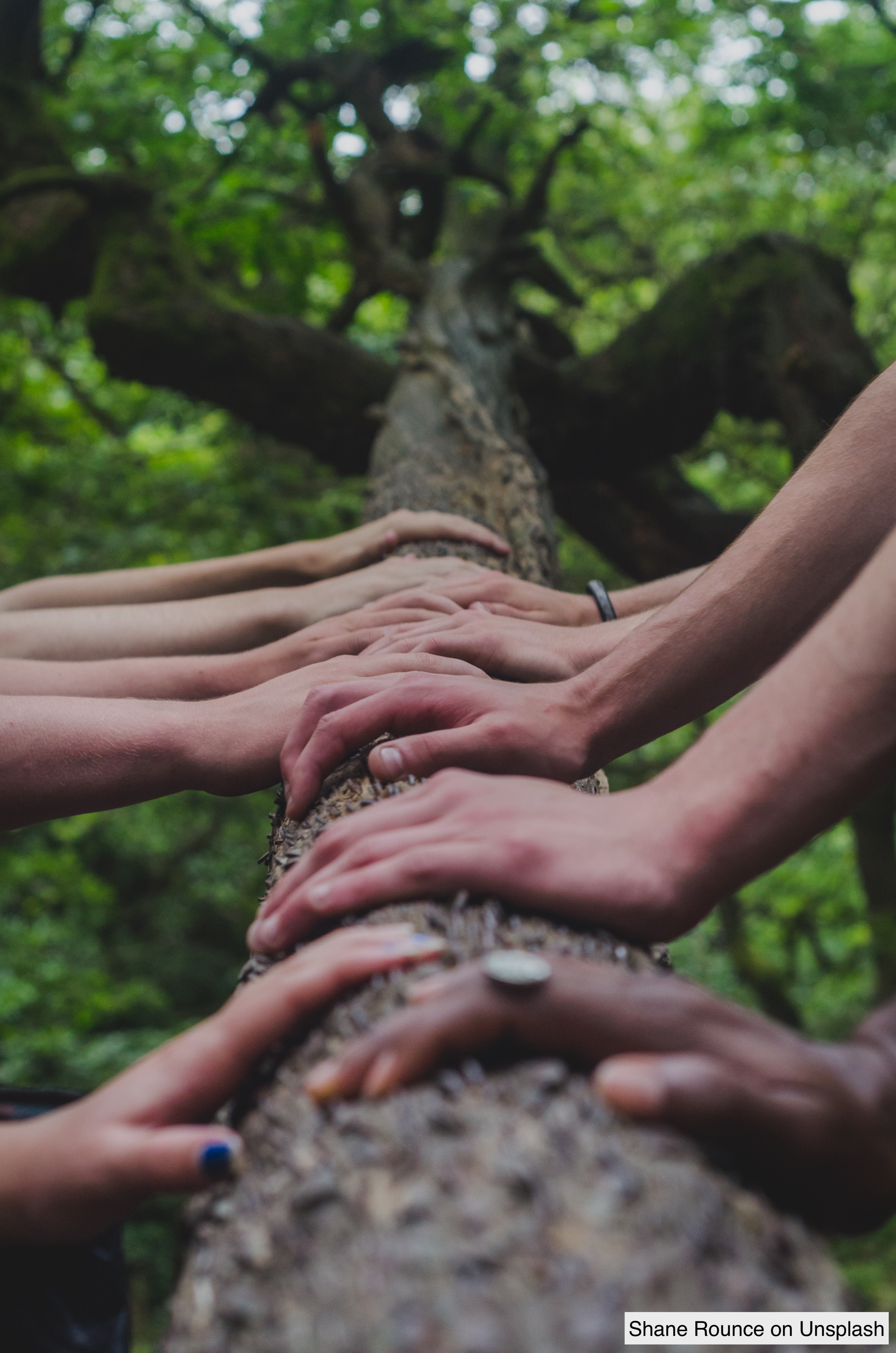 multiple hands of different color on a tree