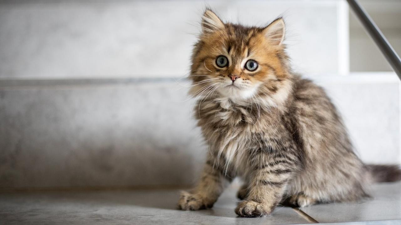 Small Cat