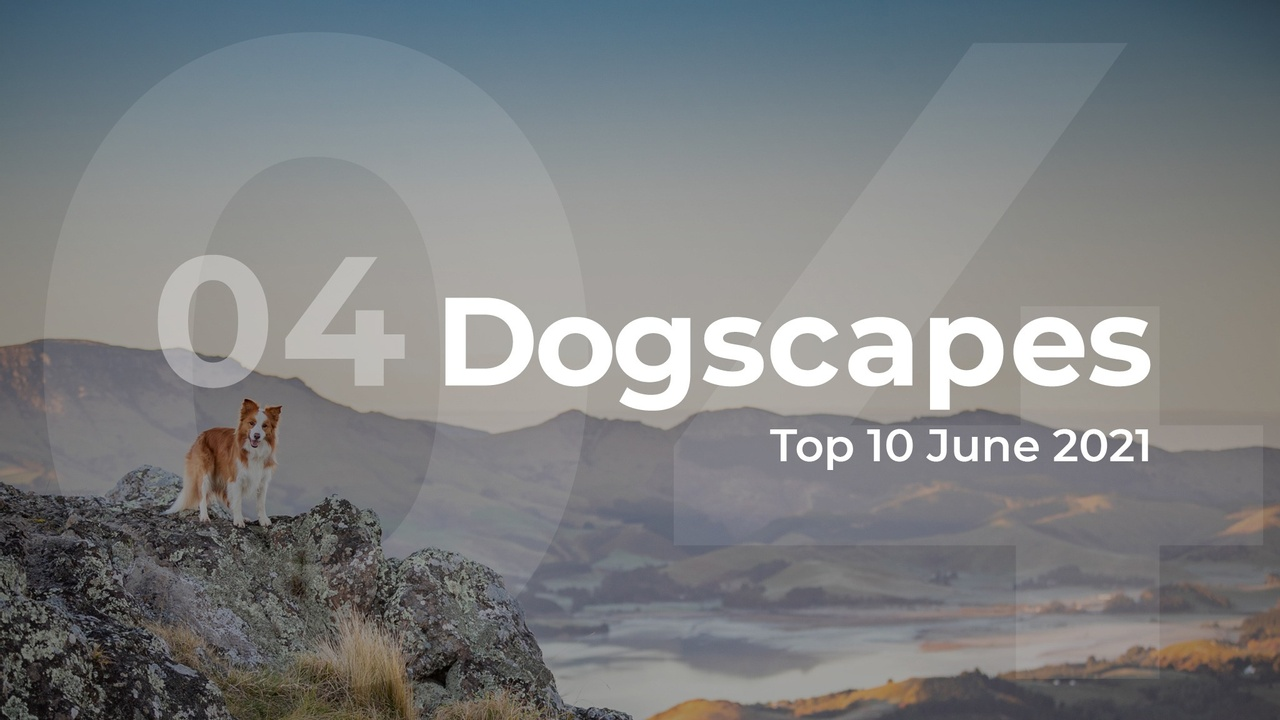 Dogscapes top 10