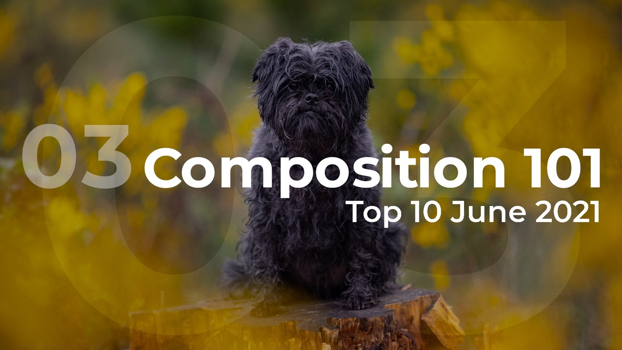 composition 101 top 10
