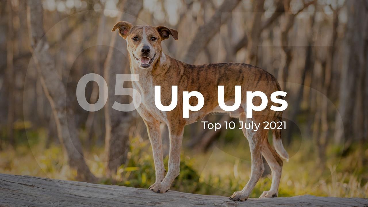 Up Ups Top 10