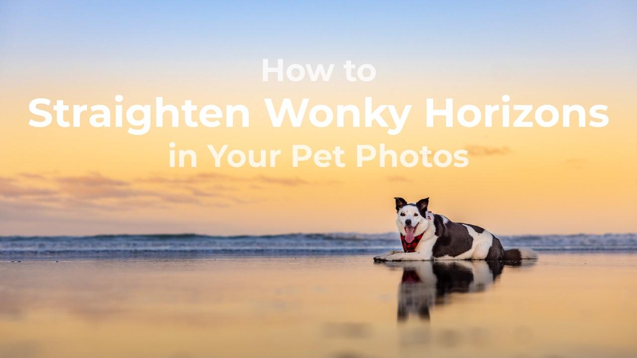 Straighten horizon in pet photos
