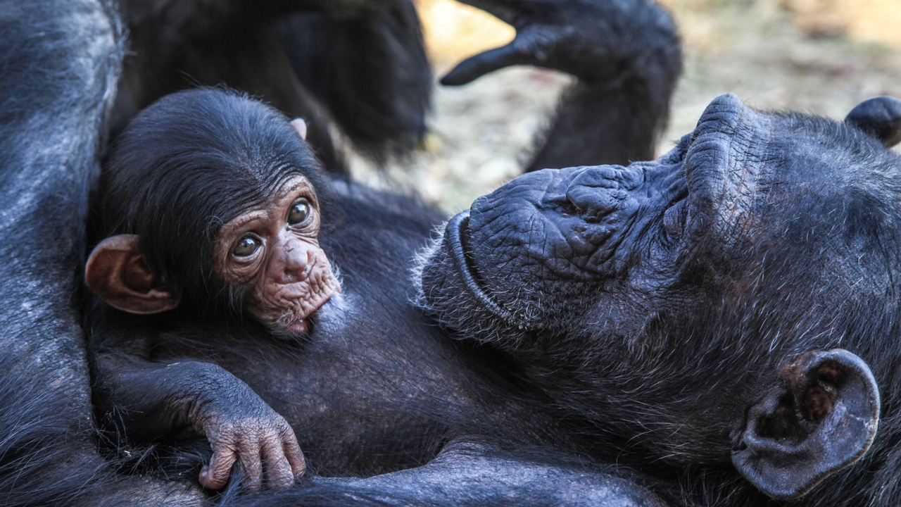 Heart-Melting Animal Stories of Mothers and Their Young