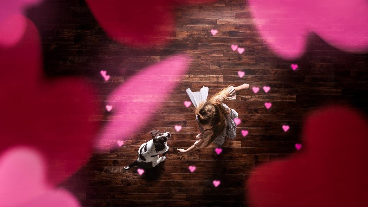 Valentine's Day Photos