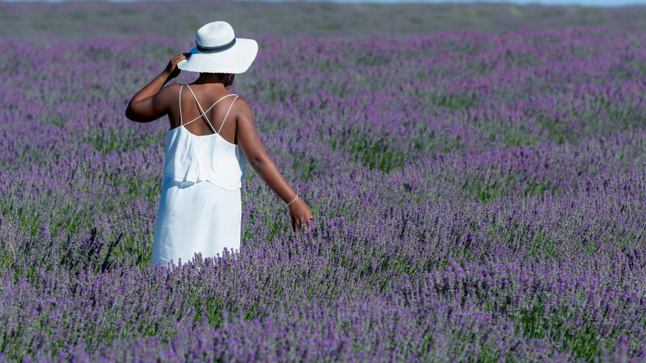 a woman walking in a lavender field