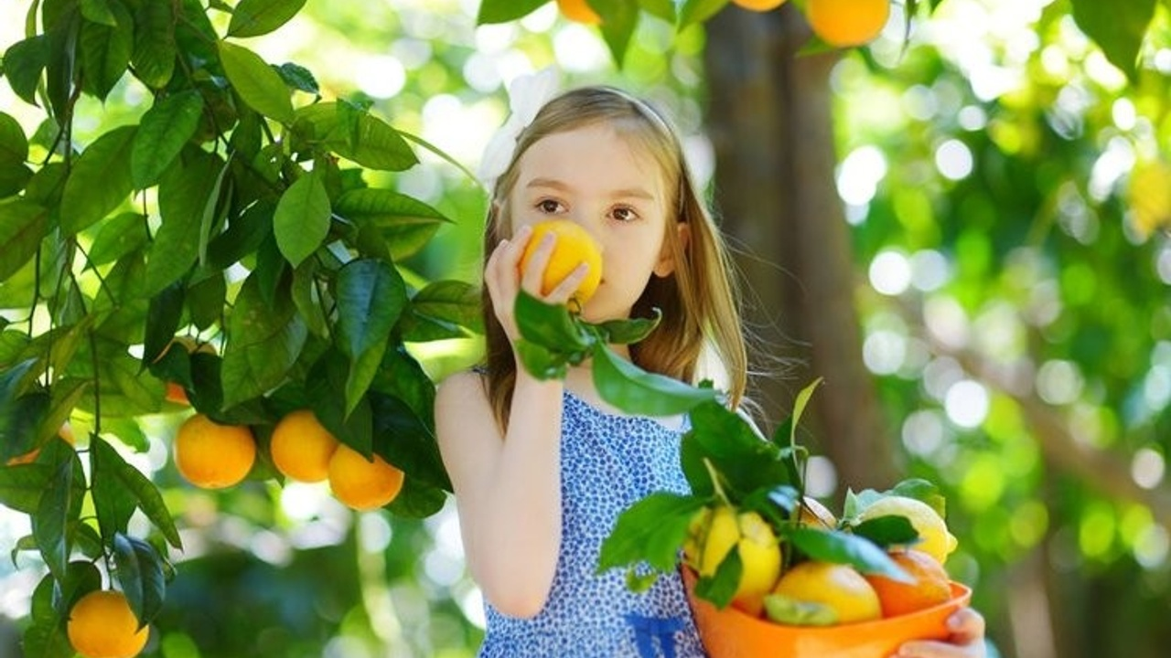 a girl holding a basket of oranges and smelling an orange