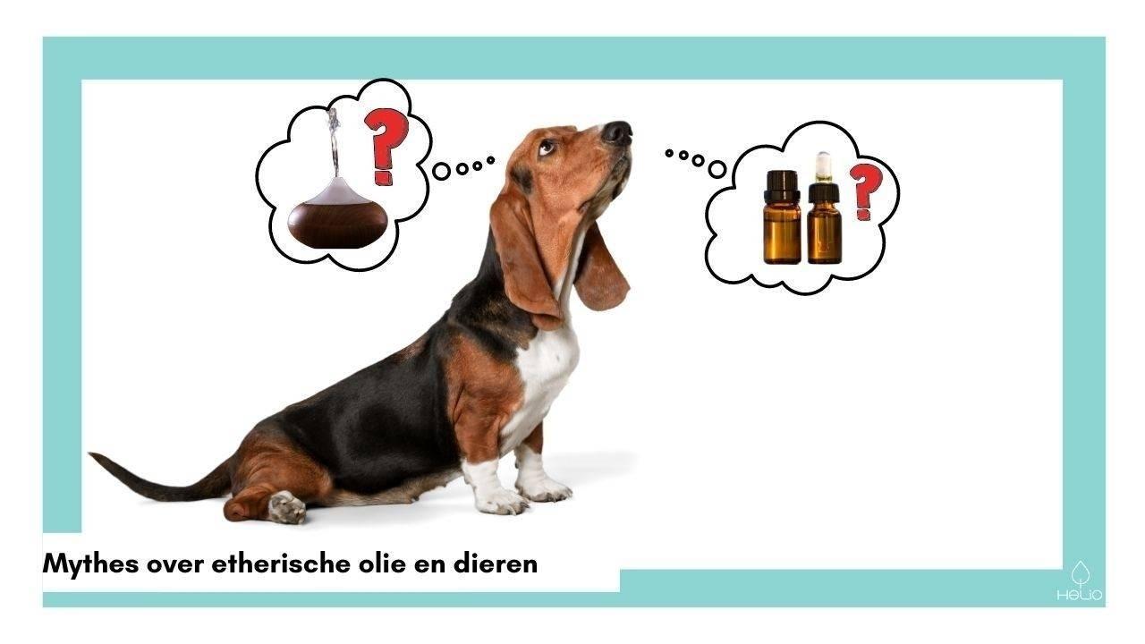 huisdieren vergiftigd door diffuser