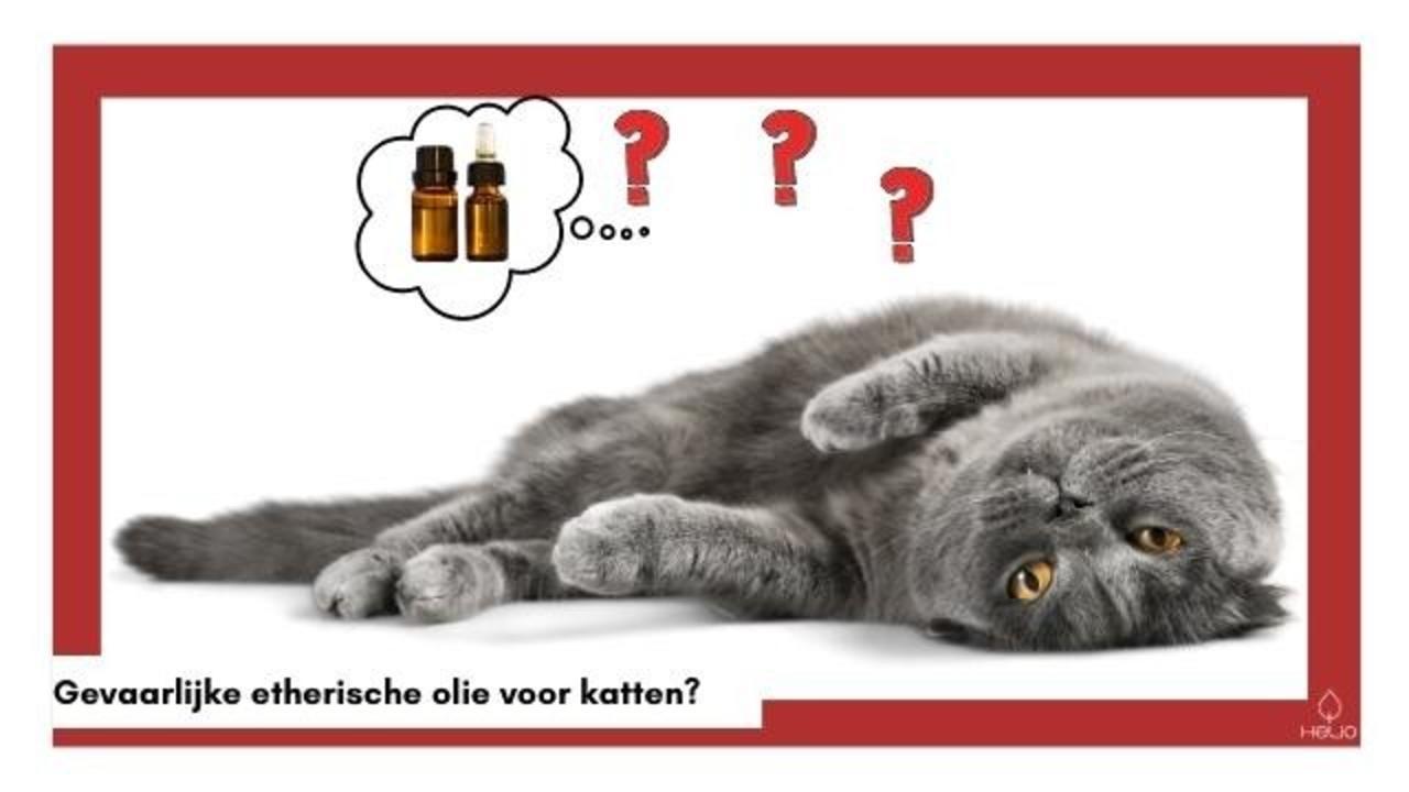 Zijn etherische oliën gevaarlijk voor katten?
