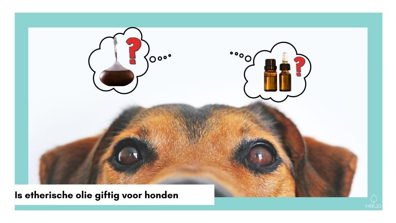 giftige oliën voor honden