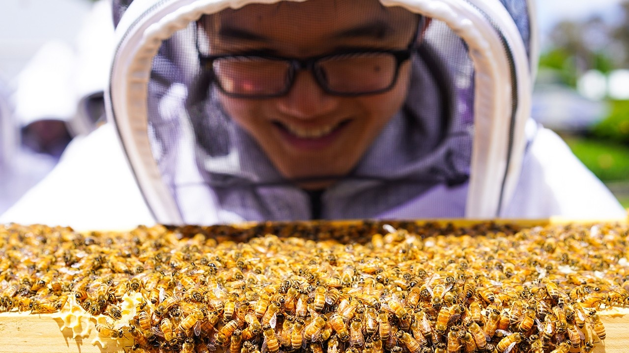 beehive inspections