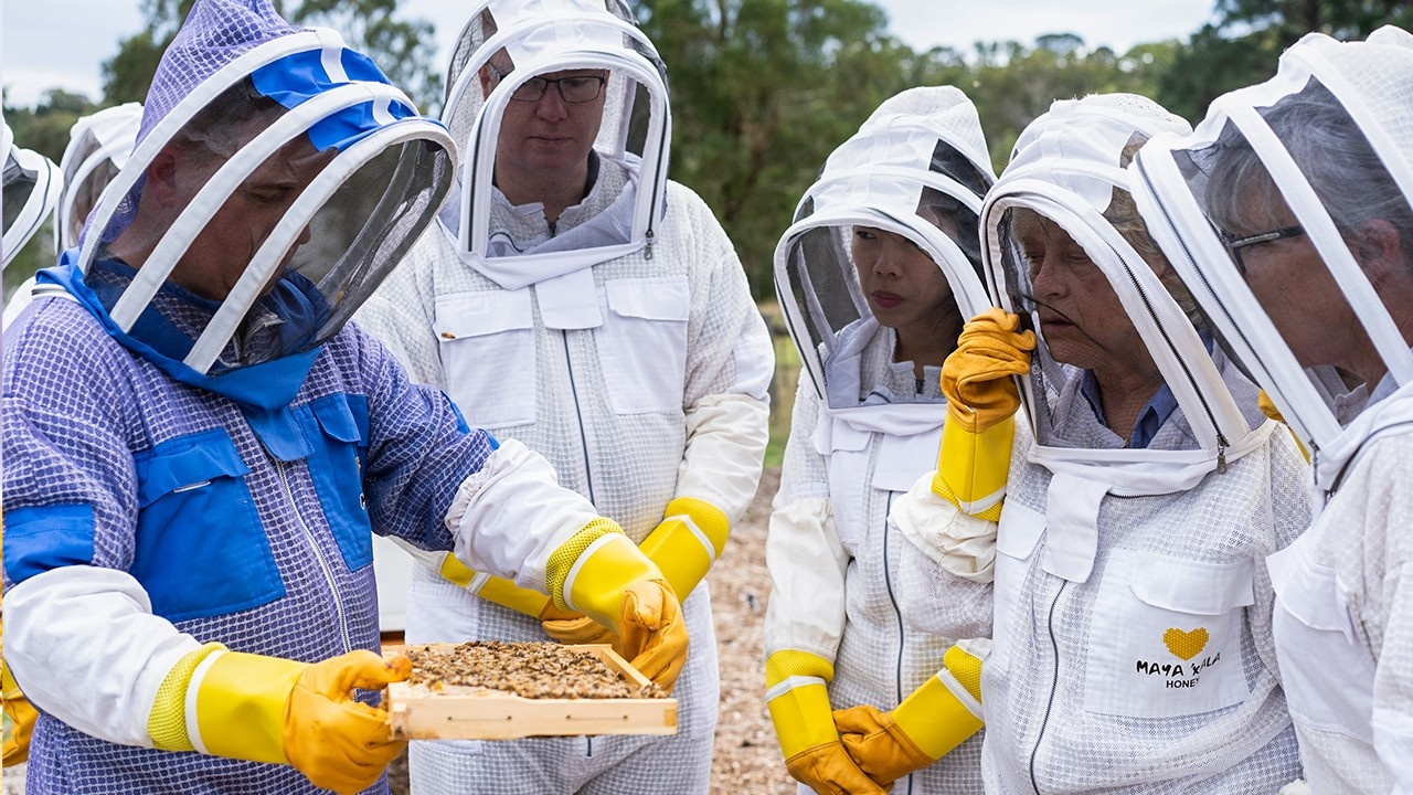 How to get started in beekeeping