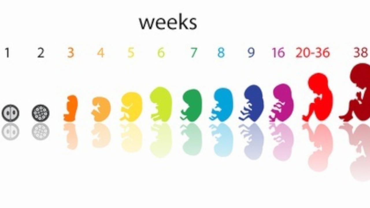 endocrine-disruptors-fetal-origins-of-adult-disease