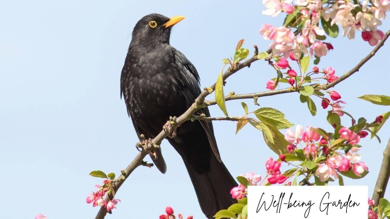 Birds' song is part of well-being garden.