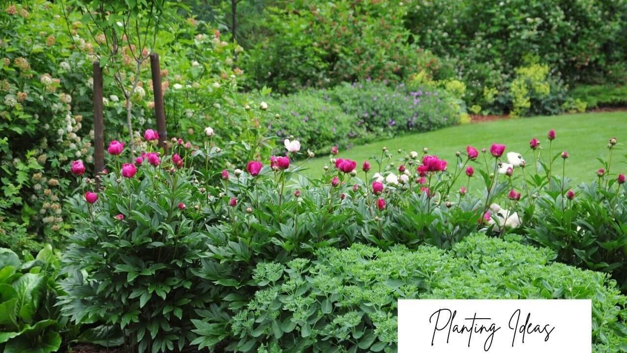 Choose easy-care plants like Sedum Autumn Joy into your low-maintenance garden