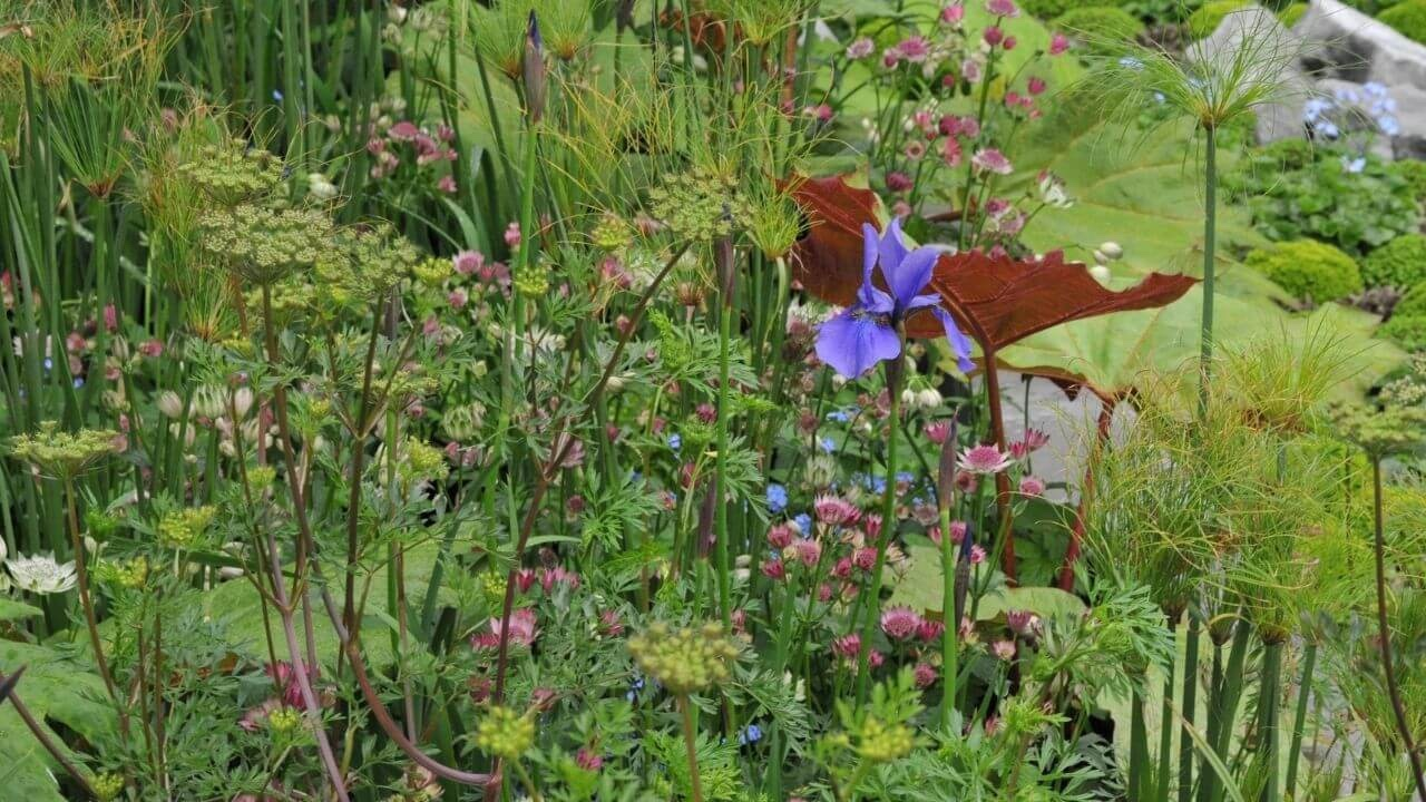 How To Prevent Flooding In Your Garden