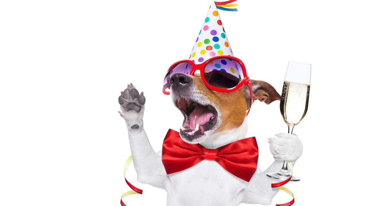 dog celebrating his goal achievement by wearing a party hat, bow tie, and sunglasses and holding a drink