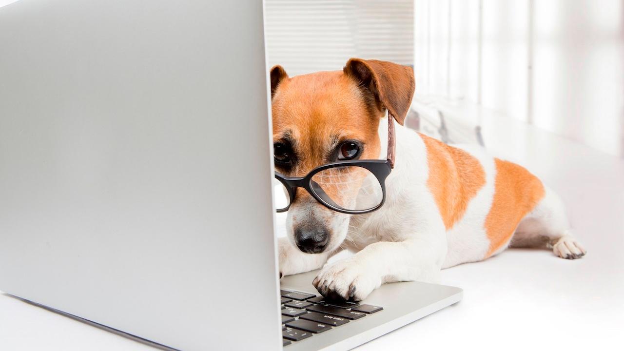 dog reading laptop