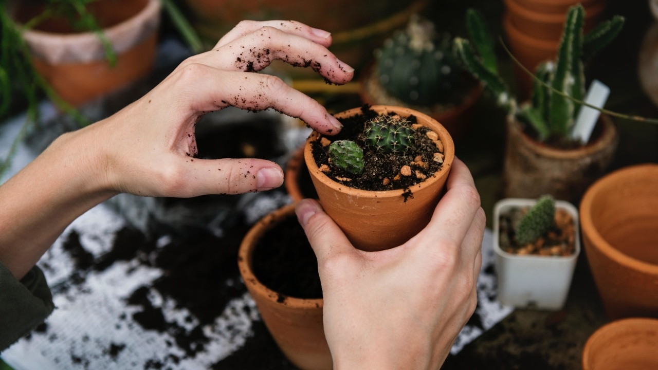 hands holding small potted plant