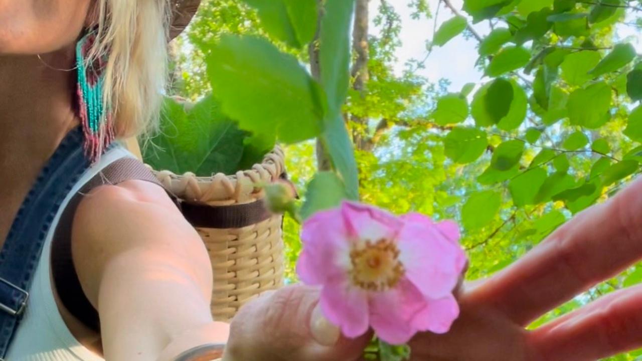 Wild Foraging | Plant medicine | Rewilding