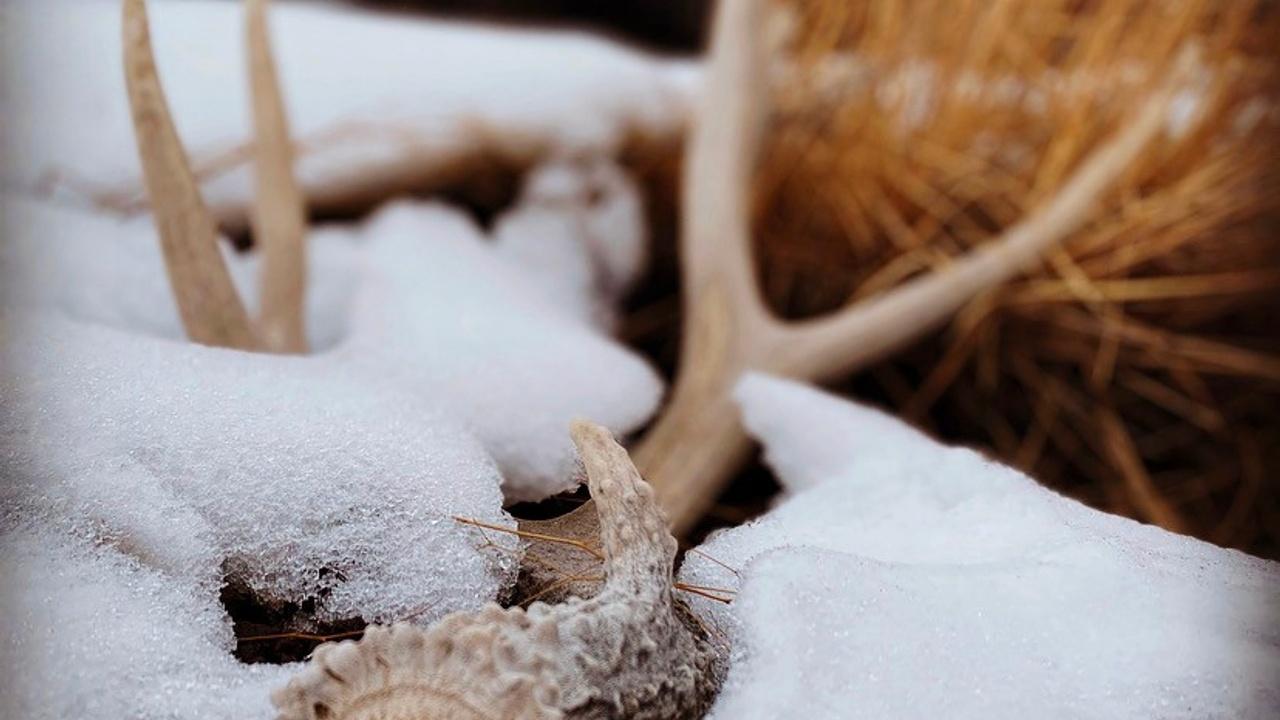 Shed Hunting | Idaho | Rewilding