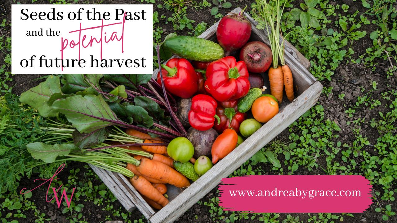 seeds; harvest; spiritual; Christianity