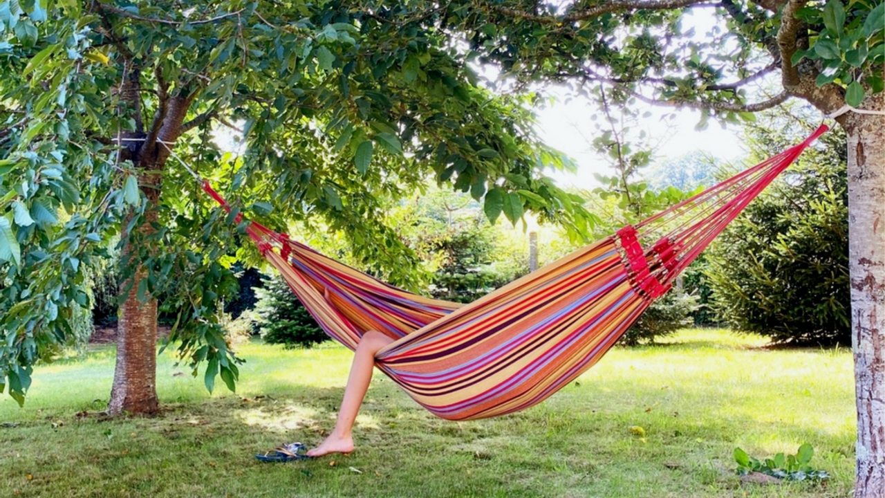hammock in the shade of trees