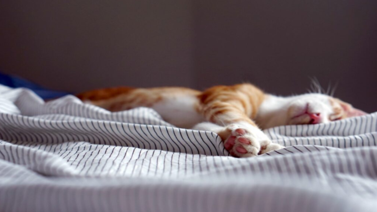 Feeling tired? 5 hacks to stay productive