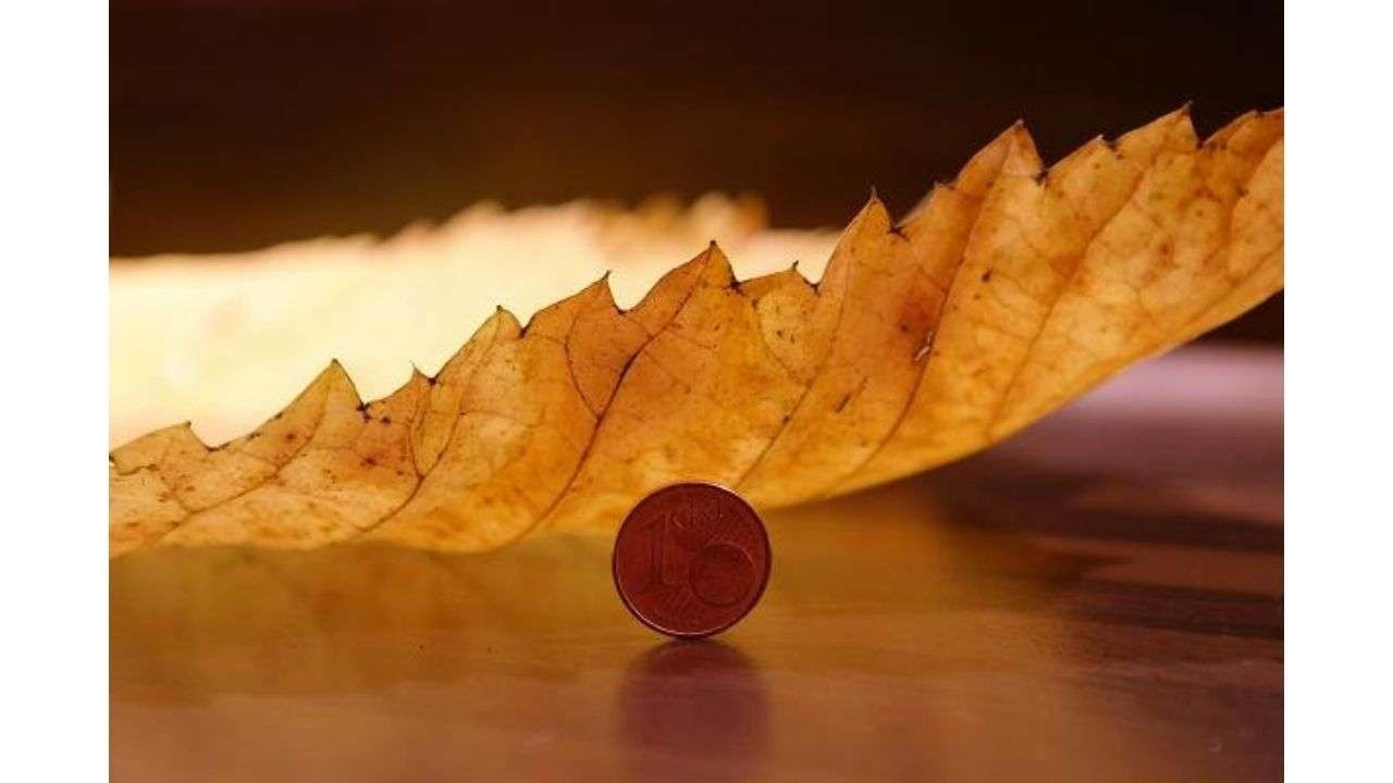 Leaf and 1 Cent coin