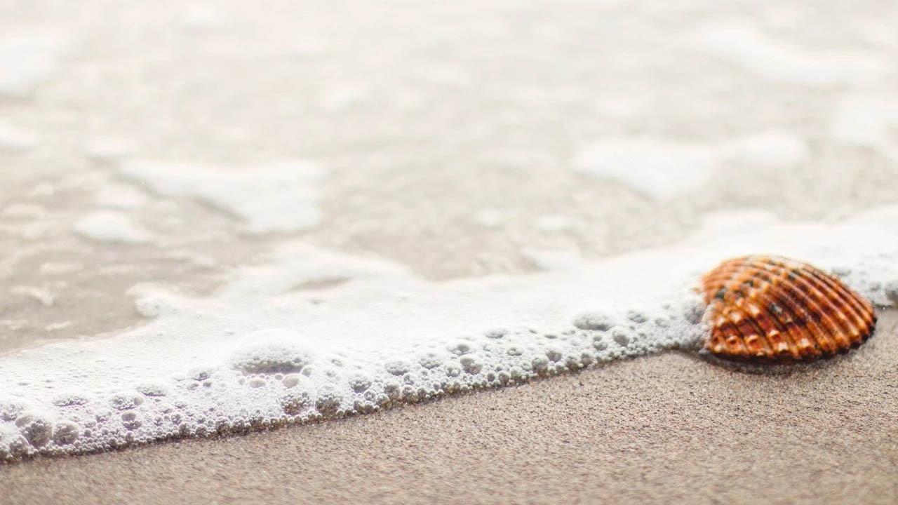 sea shore clamp shell