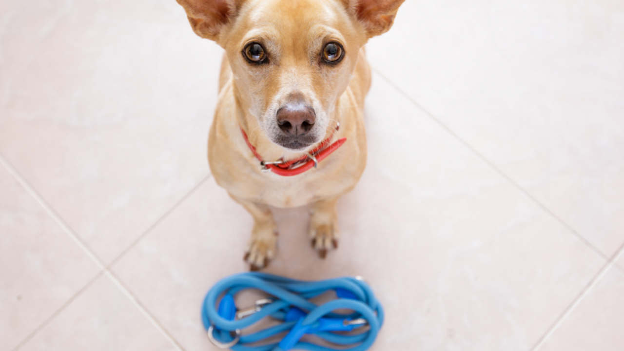 dog standing by leash