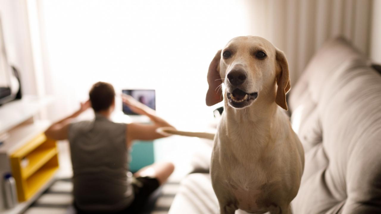 dog watching man