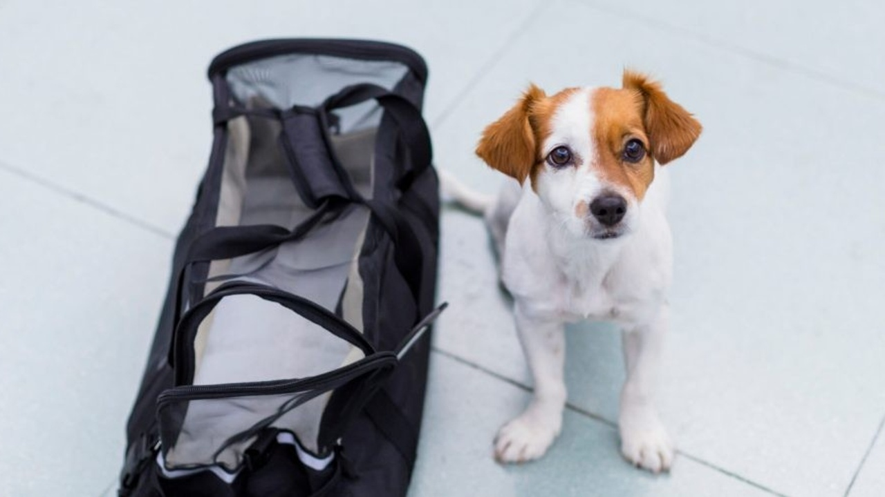 dog next to carrier