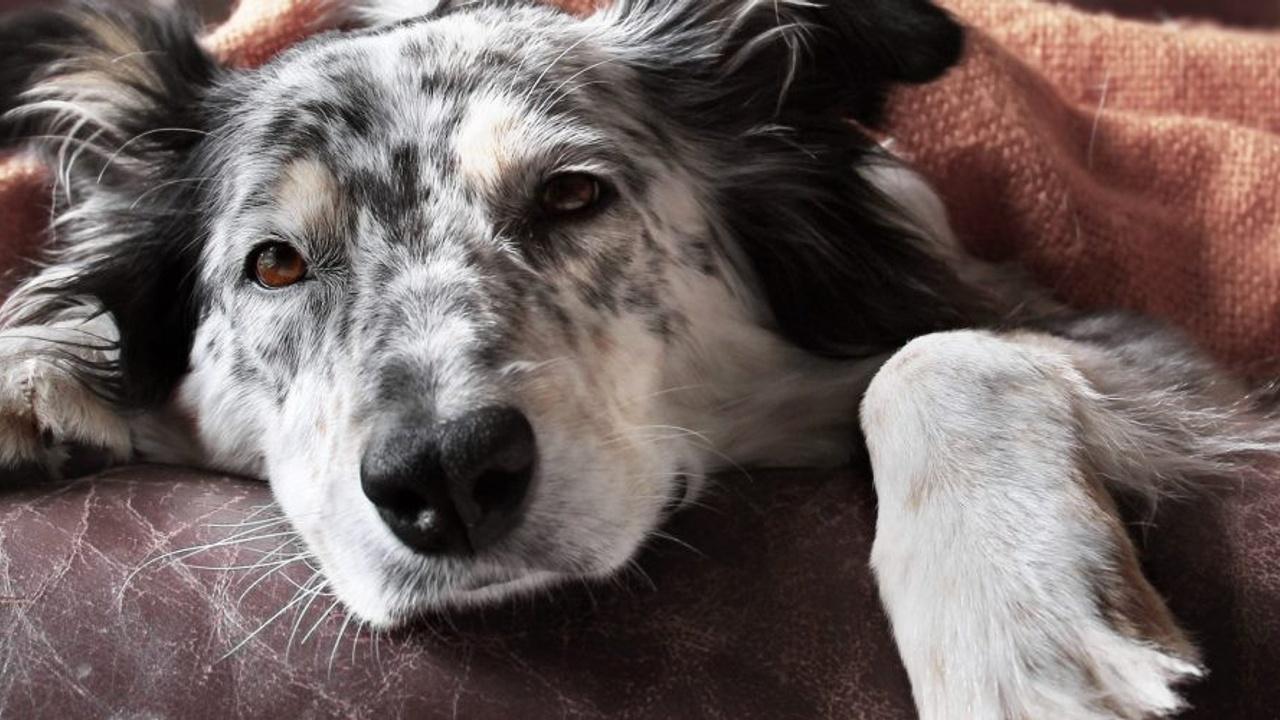 Cute dog napping