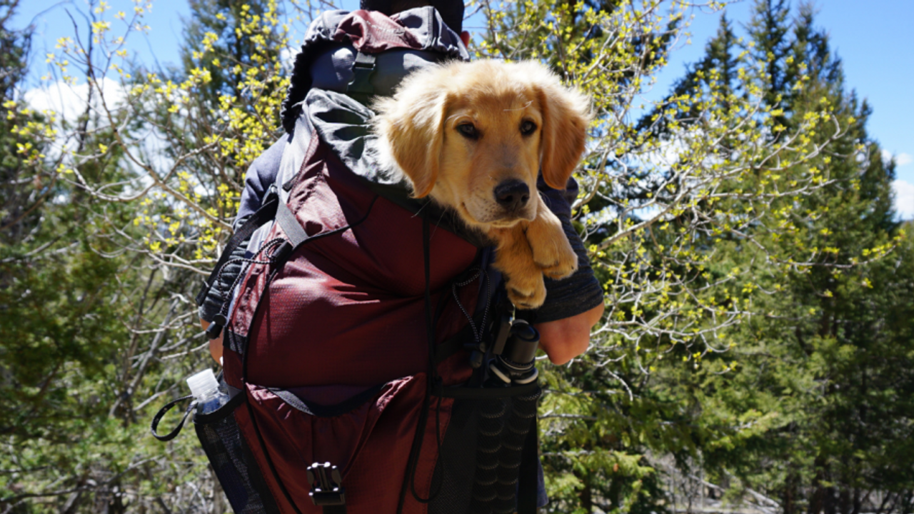 Dog hiking in pack
