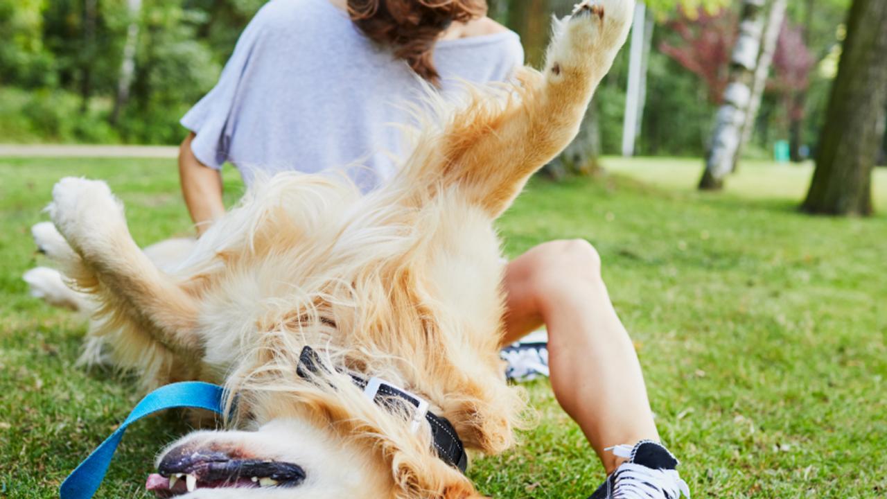 Dog playing with mom