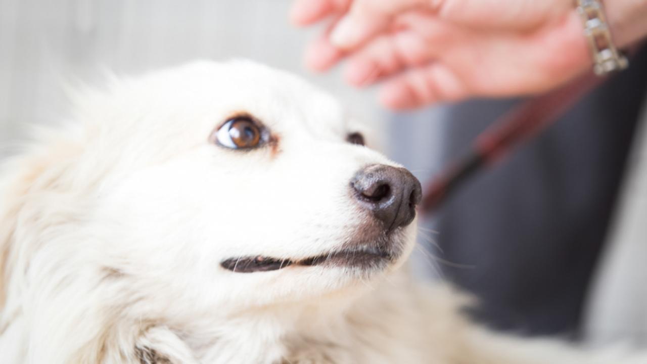 Petting Scared Dog