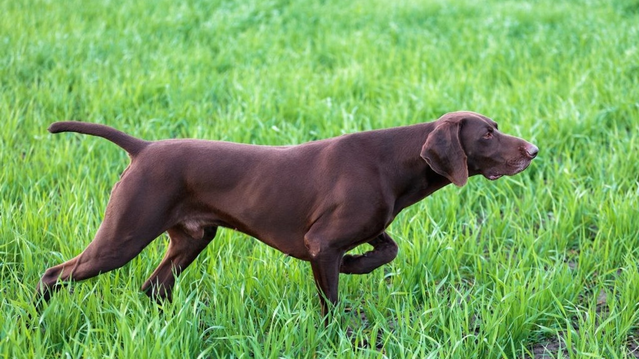 Strengthen Your Back and Glutes with the Bird Dog Exercise