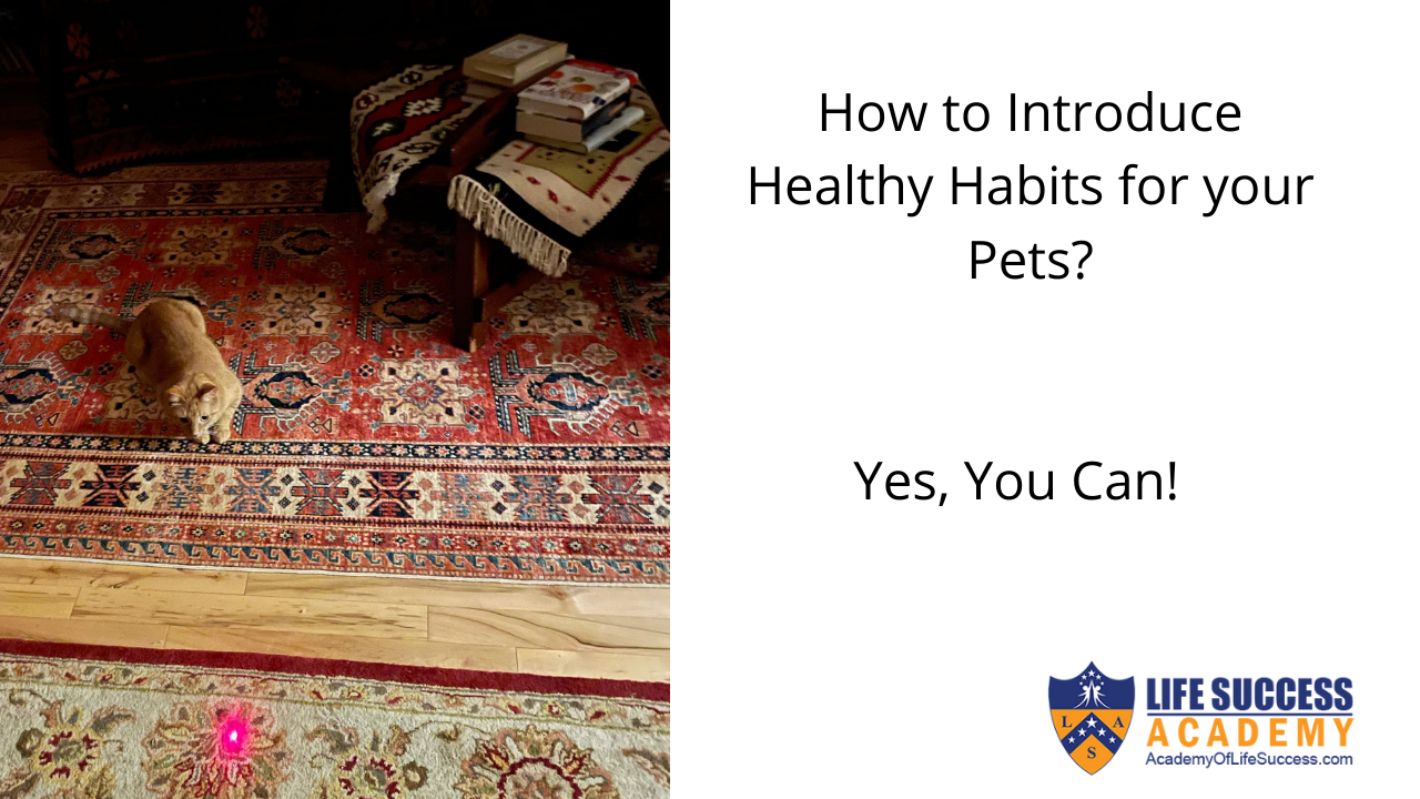 Introduce Healthy Habits For Your Pets