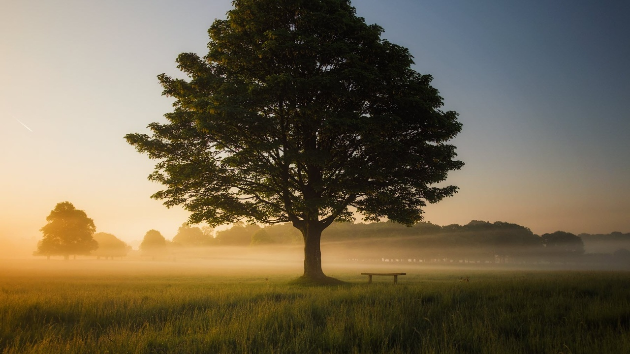 Lonely tree in mist