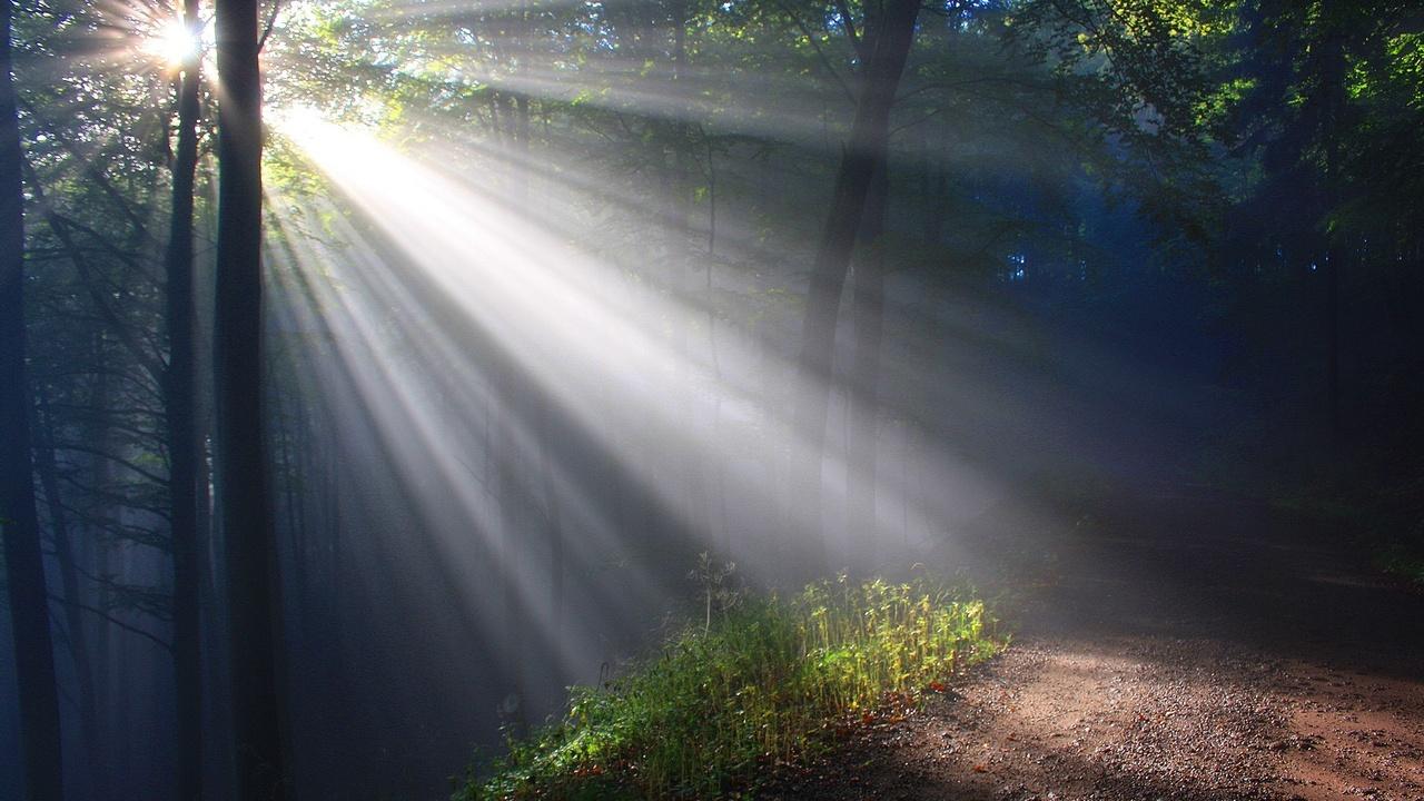 sunbeam through the woods