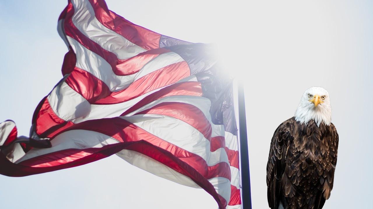 Bald Eagle Ashamed of Your Lack of Patriotism