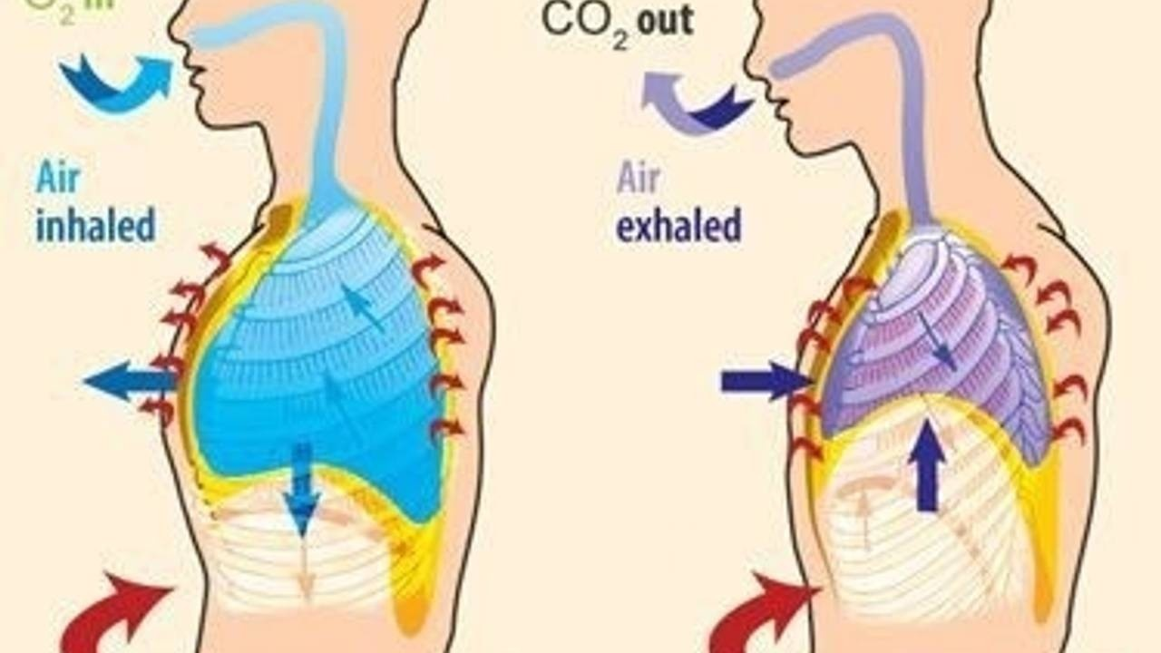 THE MASSIVELY UNDERRATED ROLE OF BREATHING IN POSTURE