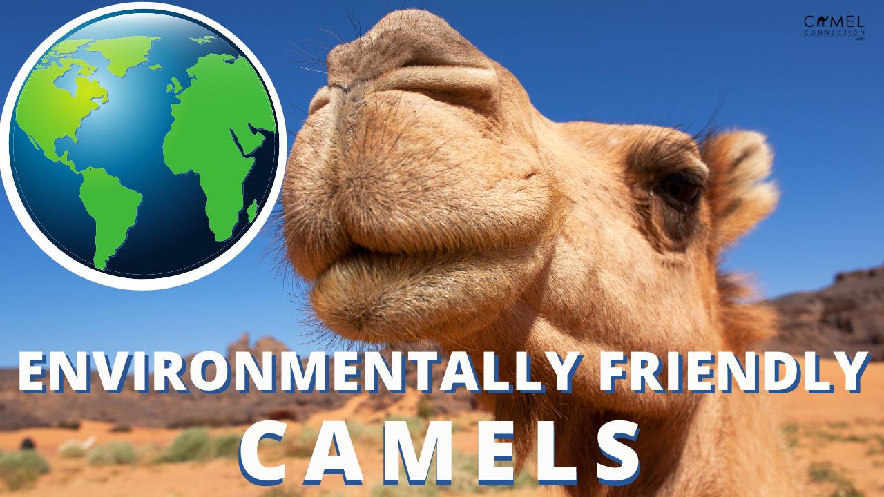 Earth & Environmentally Friendly Camels