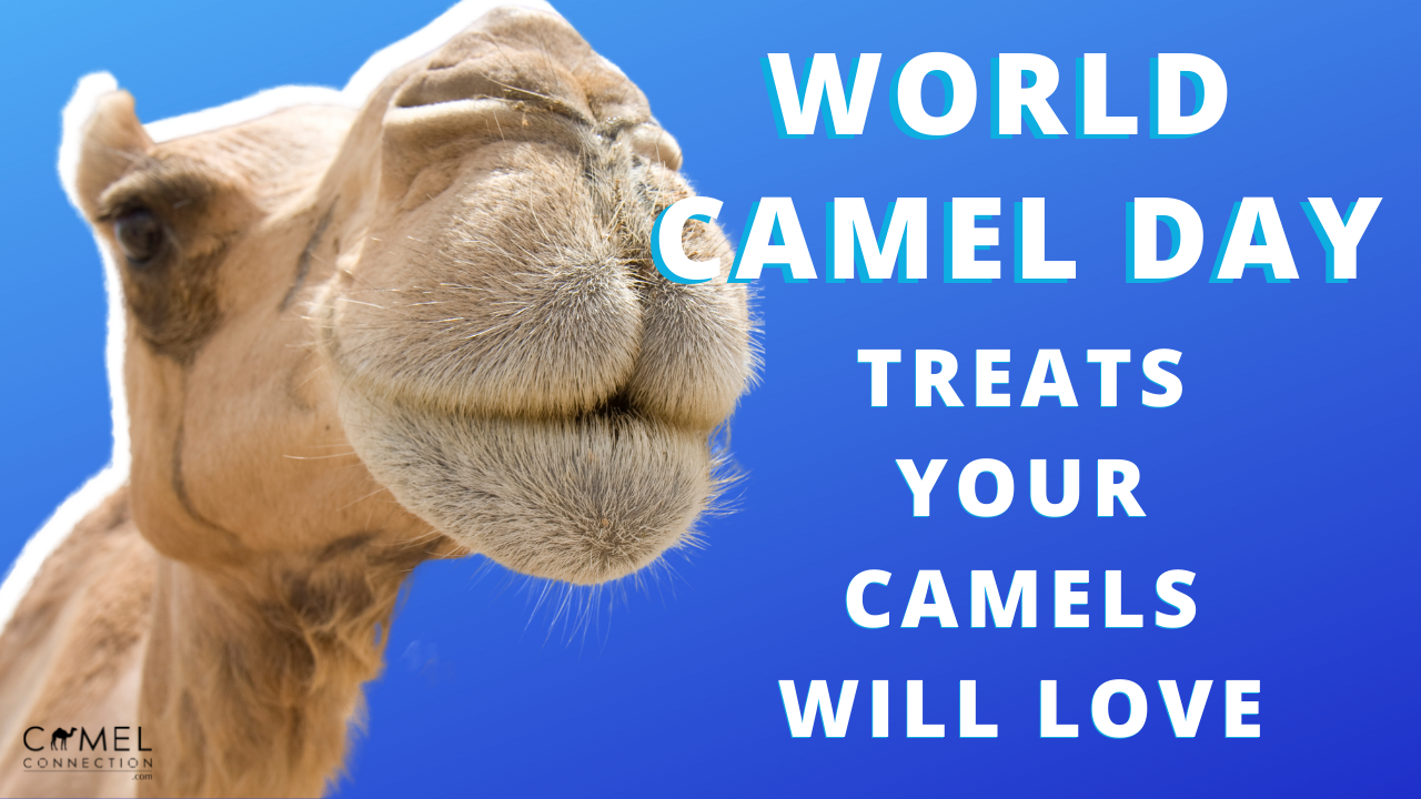 World Camel Day: Treats Your Camels Will Love!
