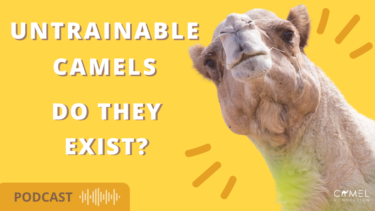 Untrainable Camels