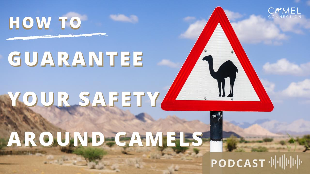 Safety Around Camels