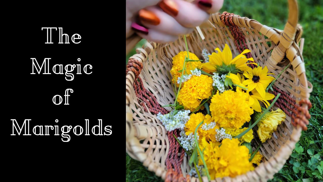Marigold Magical Uses