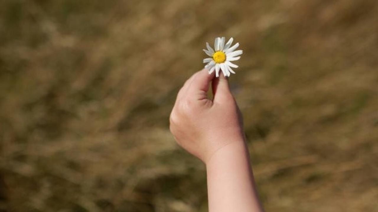 Une main tend une petite fleur blanche vers l'écran